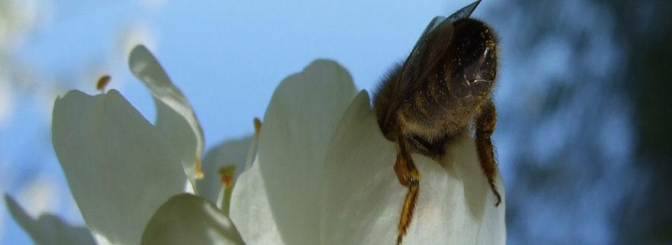 Bienenkoenigin2